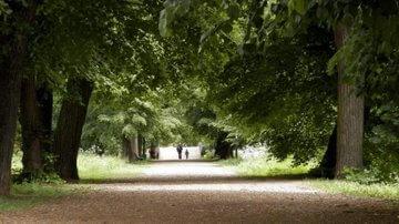 Drzewa przy drodze